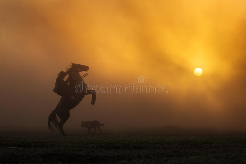 Cowboy puting his horse to stay in two feets at sunset with dust in background stock images