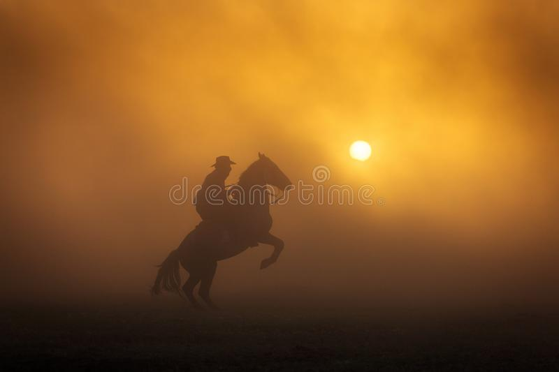 Cowboy puting his horse to stay in two feets at sunset with dust in background.  stock image