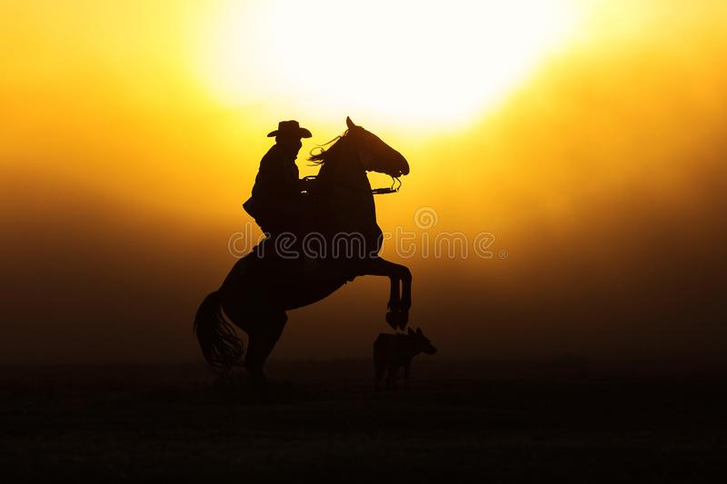 Cowboy puting his horse to stay in two feets at sunset with dust stock photography