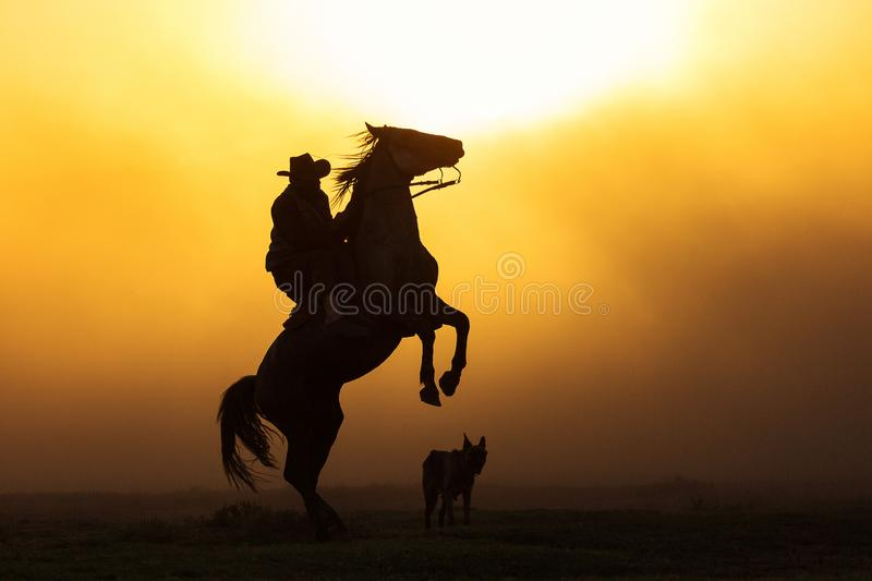 Cowboy puting his horse to stay in two feets at sunset with dust royalty free stock image