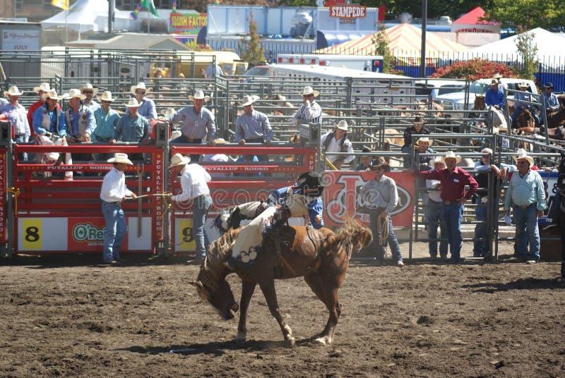Download Cowboy Que Monta O Cavalo Selvagem Imagem de Stock Editorial - Imagem de selvagem, cowboy: 26516649