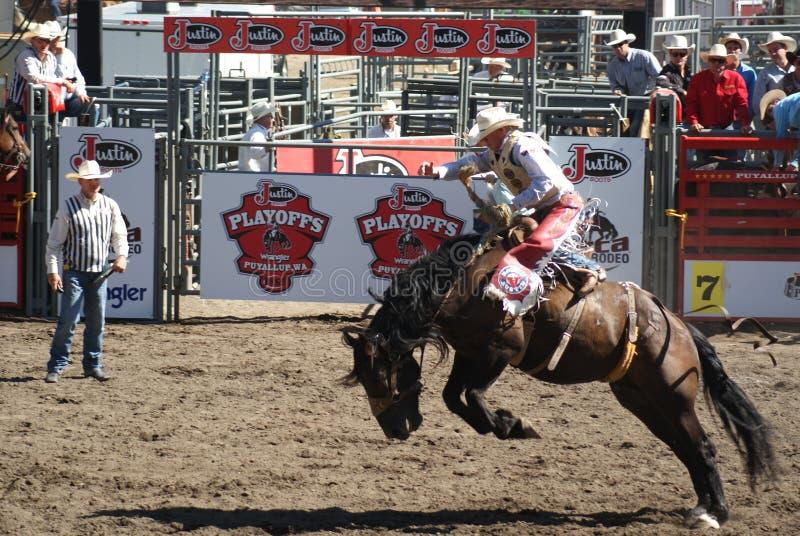 Download Cowboy Que Monta O Cavalo Selvagem Fotografia Editorial - Imagem de lama, marrom: 26516757