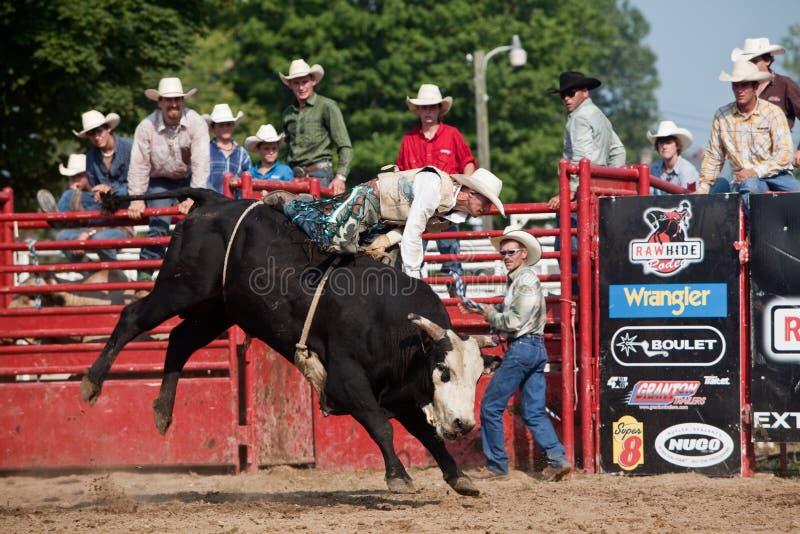Cowboy que monta um touro na competição fotografia de stock