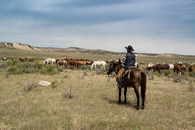 Cowboy ranch hand on horse watching over herd of horses on prairie royalty free stock photo