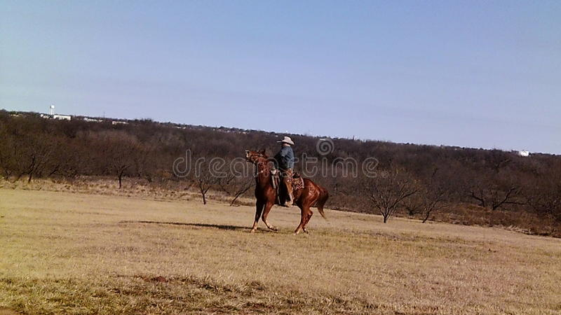 Cowboy Riding Off to Roundup Cattle. 10 acre land full of lush grasses and wild mesquite trees skies cowboy cow roundup royalty free stock image