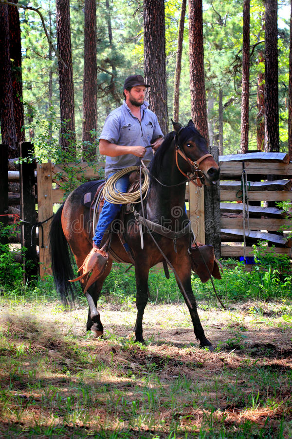 Cowboy Riding un cheval de selle image stock