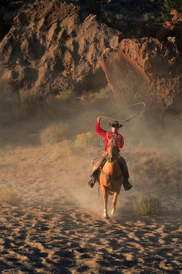 Cowboy Roping fotografia de stock royalty free