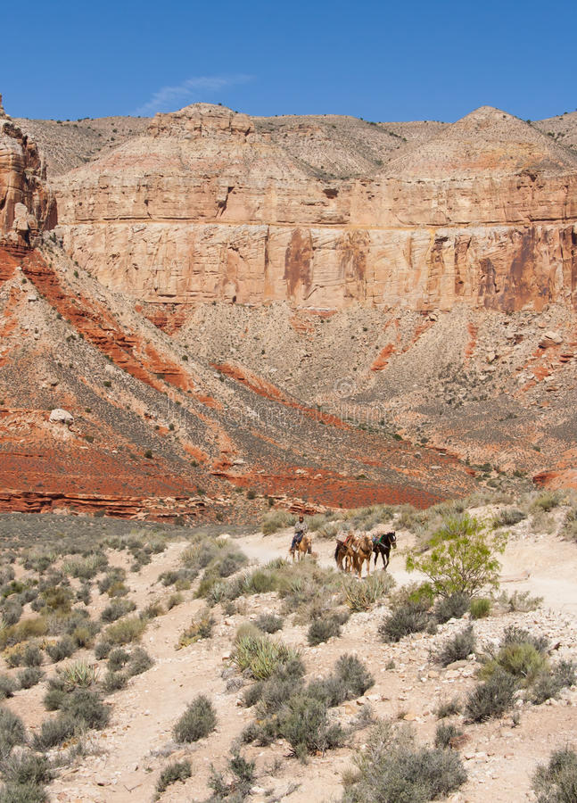 Download Cowboy's life stock photo. Image of point, arid, exploration - 25840354