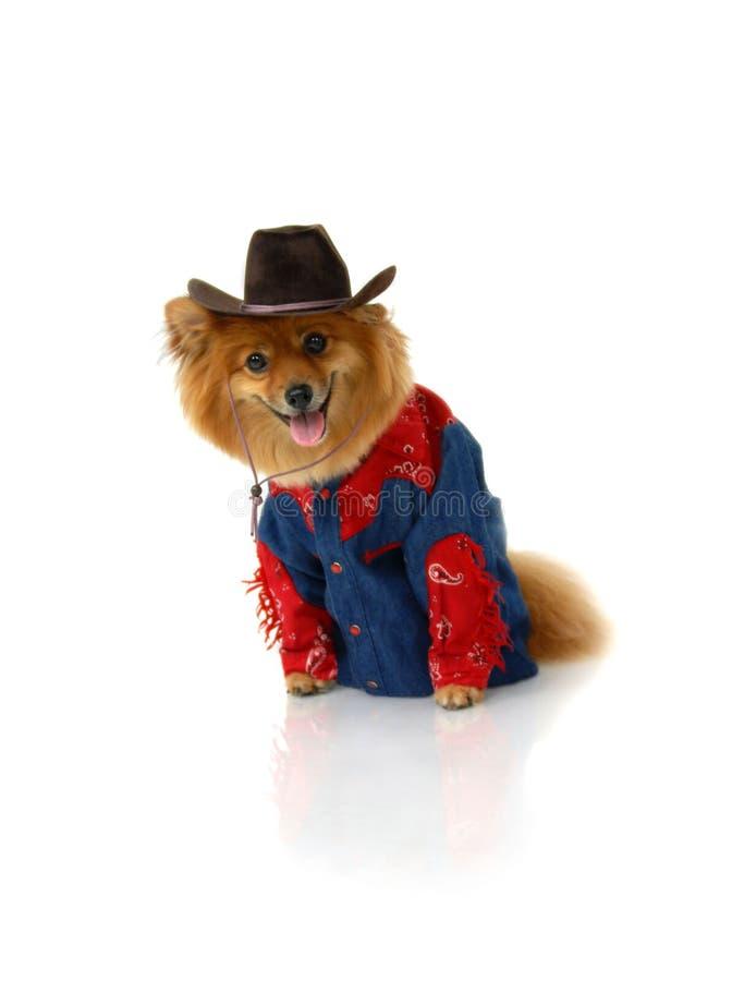 Cowboy sans cheval photo libre de droits