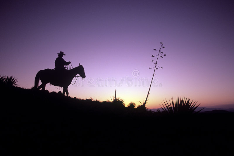 Cowboy silhouetté images stock