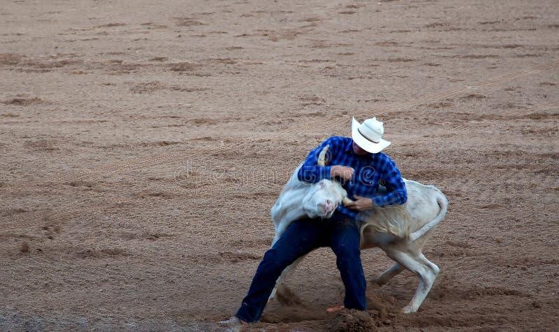 Cowboy som tar ner tjur på rodeon arkivbild