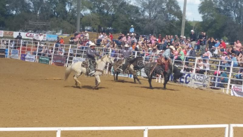 Download Cowboy sur le cheval photo stock éditorial. Image du bucking - 87706393