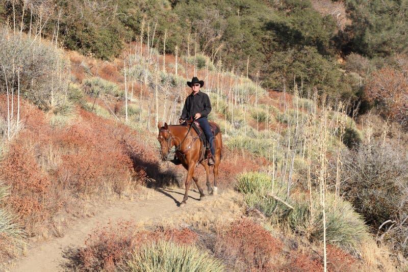 Cowboy sur un journal de montagne de désert. photographie stock libre de droits