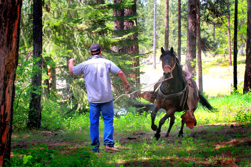 Cowboy Training Running Horse photographie stock