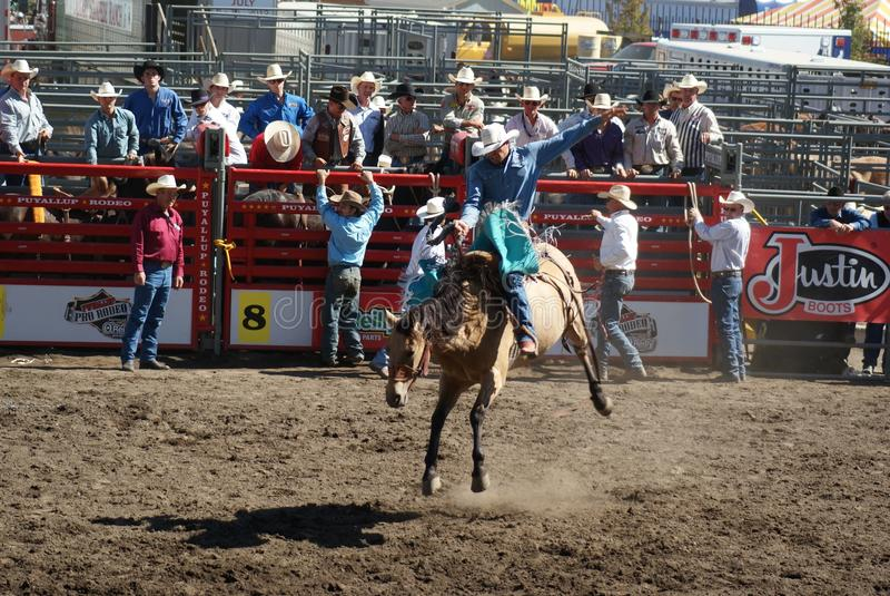 Download Cowboy Wild Horse Riding Editorial Image - Image: 26518330