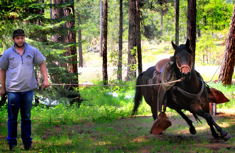 Cowboy Working Running Horse photographie stock libre de droits