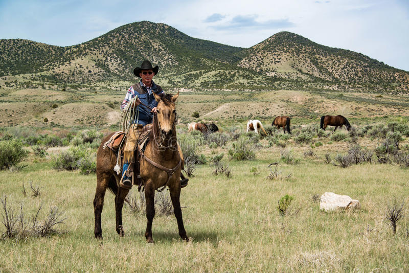 Cowboy wrangler ranch hand on horse with rope watching over horse herd. On prairie royalty free stock photography