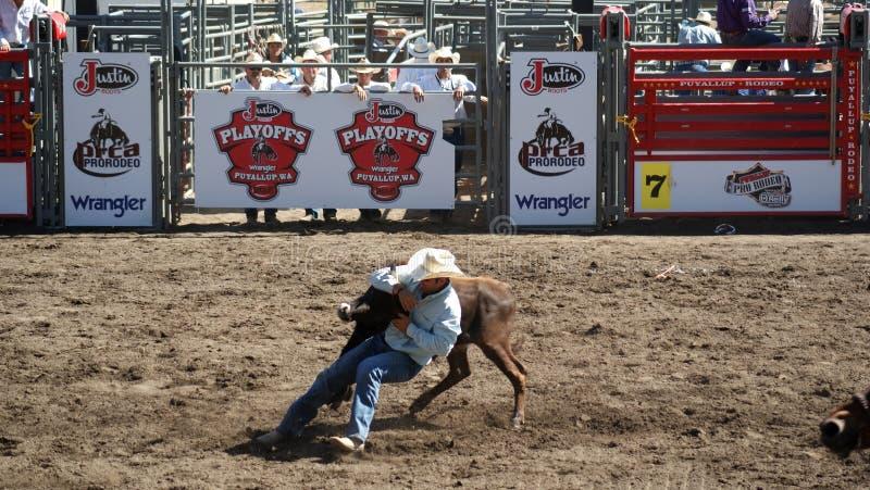 Download Cowboy wrestling a steer editorial photo. Image of wrestling - 26516651
