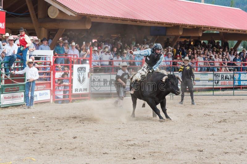 Cowboyen slåss för att bli på att sparka bakut tjuren på rusningen arkivfoto