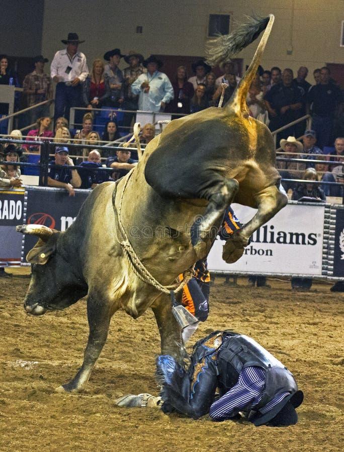 Cowboyer för rodeotjurryttare arkivfoto