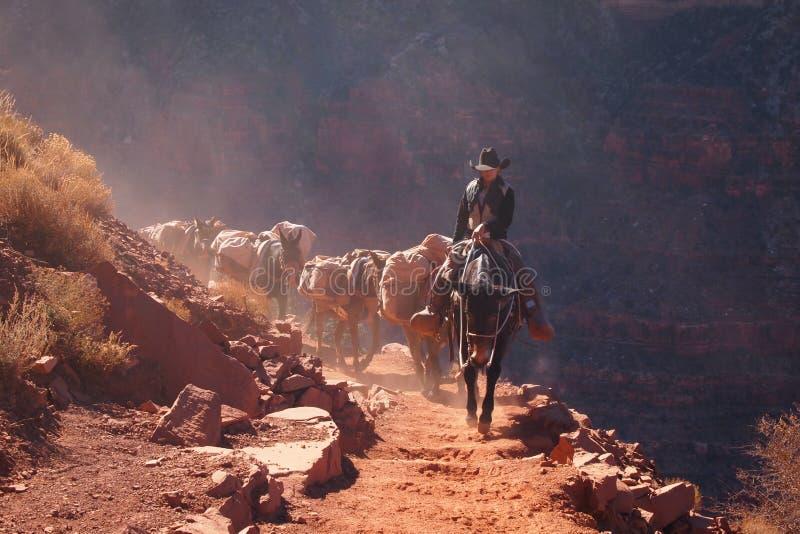 Cowboyer på en solig dag arkivbild