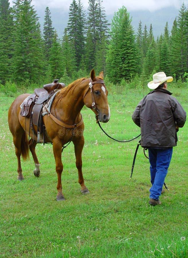cowboyhäst royaltyfri fotografi