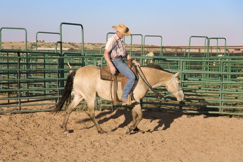 cowboyhästridning arkivfoton