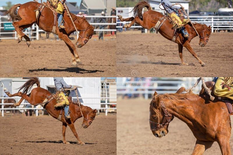 CowboyRiding Bucking Bronco collage royaltyfria foton