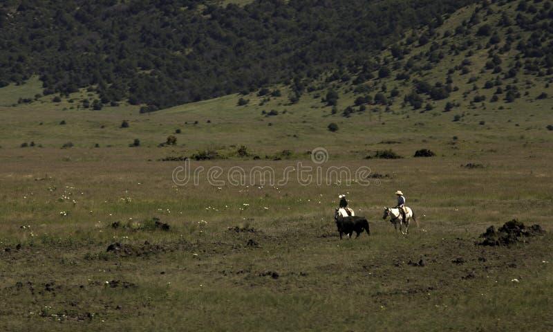 cowboys stock foto's