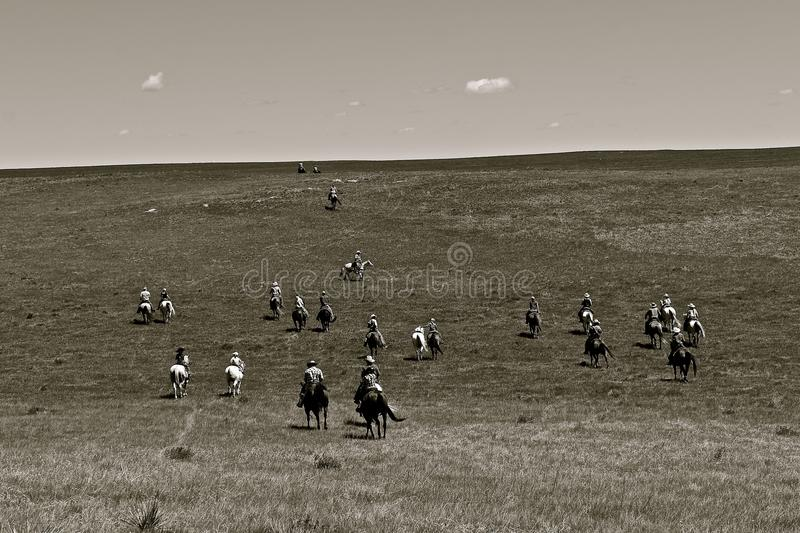 Cowboys and cowgirl headed to a roundup. Unidentified cowboys ride over the prairies headed to a roundup and branding session. black and white royalty free stock photo