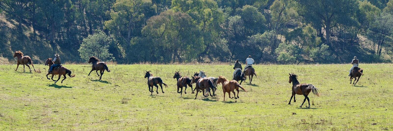 Cowboys, die wilde Pferde ausüben stockbilder