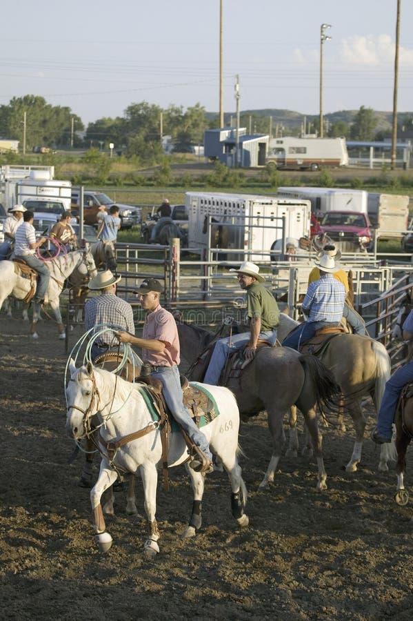 Cowboys em cavalos com corda no rodeio de PRCA imagem de stock royalty free