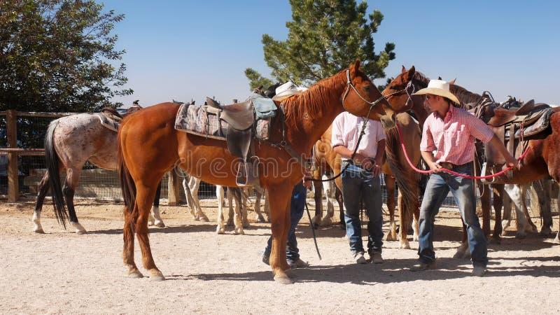 Cowboys en Paarden, Bryce Canyon, Utah stock foto's