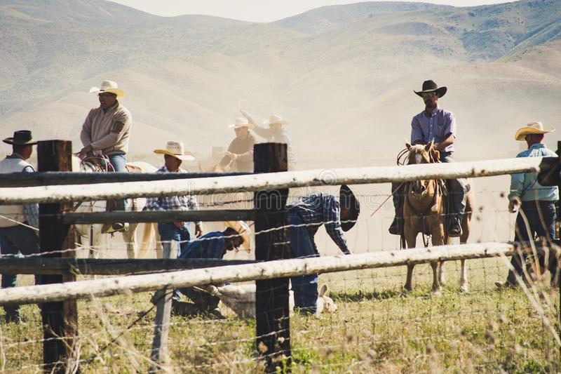 Cowboys Riding a Horse Near Gray Wooden Fence Taken during Dayitme royalty free stock image