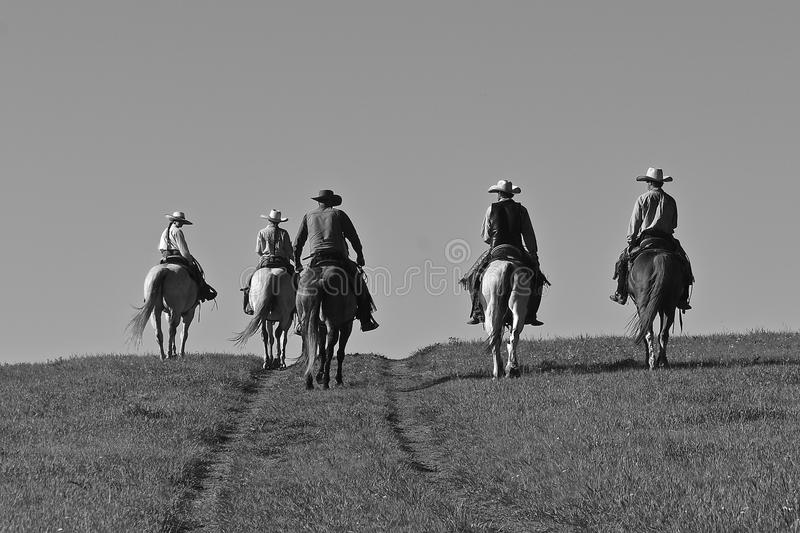 Cowboys riding horse in a roundup. Unidentified cowboys ride over the prairies headed to a roundup and branding session. black and white royalty free stock photo