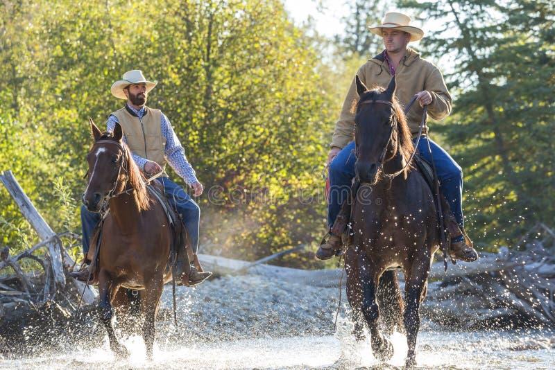 Cowboys u. Pferde stockfotografie