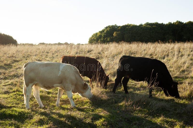 Cowboytraum lizenzfreie stockfotos