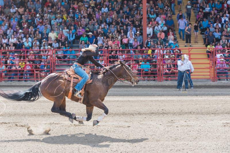 Cowgirl e ippica all'arrivo al barilotto che corre concorrenza fotografia stock libera da diritti