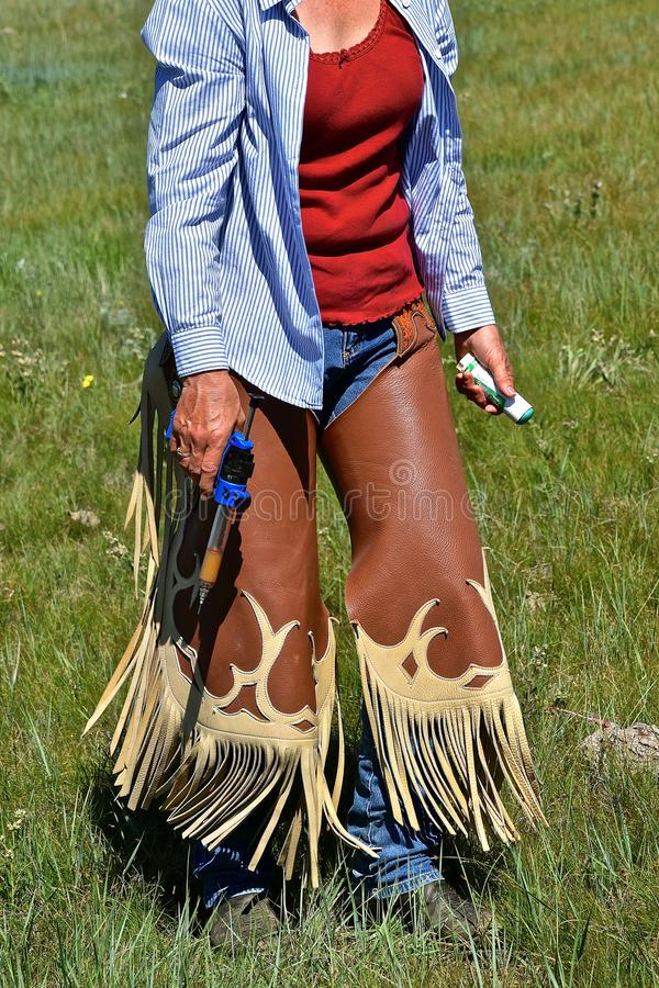 Cowgirl works as roundup veterinarian. A cowgirl in chaps hold the syringe and vaccine during a western roundup and branding royalty free stock photos
