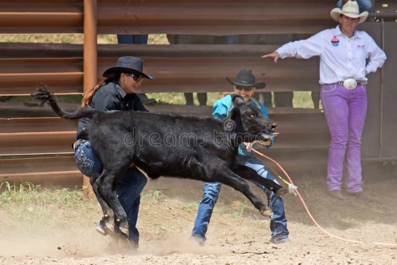 Cowgirls przy pracą zdjęcia stock