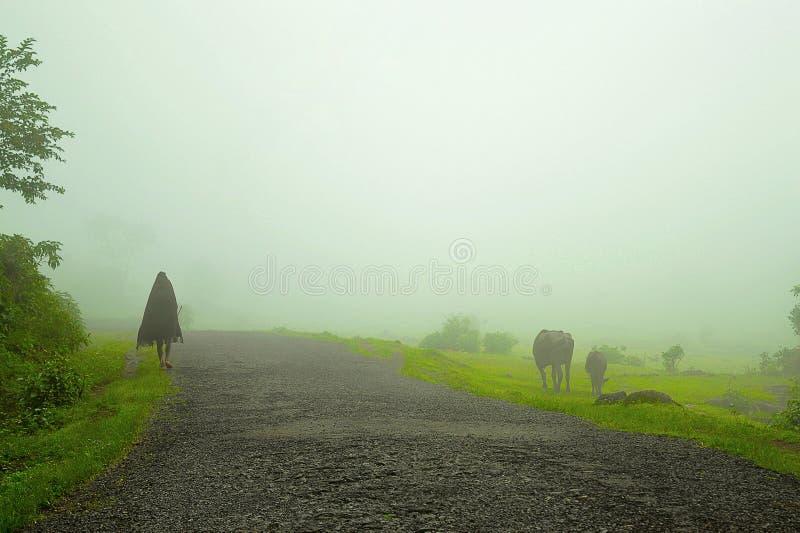 Cowherd in mist dichtbij Bhimashankar stock fotografie