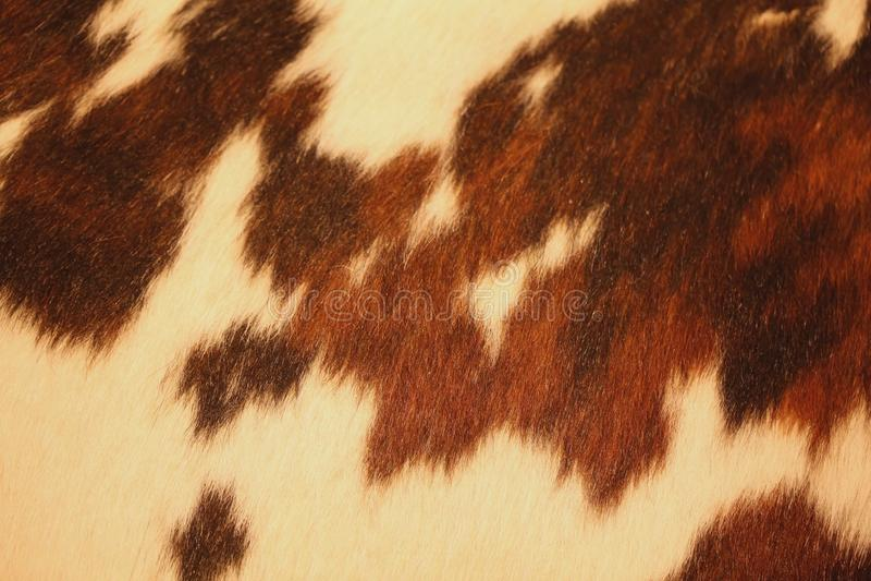 cowhide photos stock