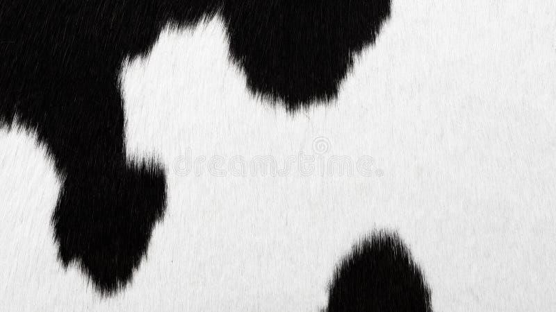cowhide image libre de droits