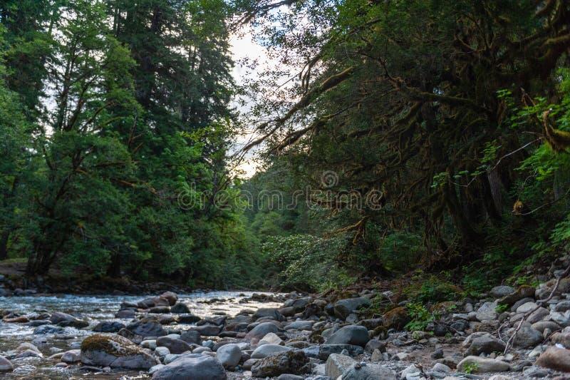 Cowlitz河在华盛顿 免版税库存照片