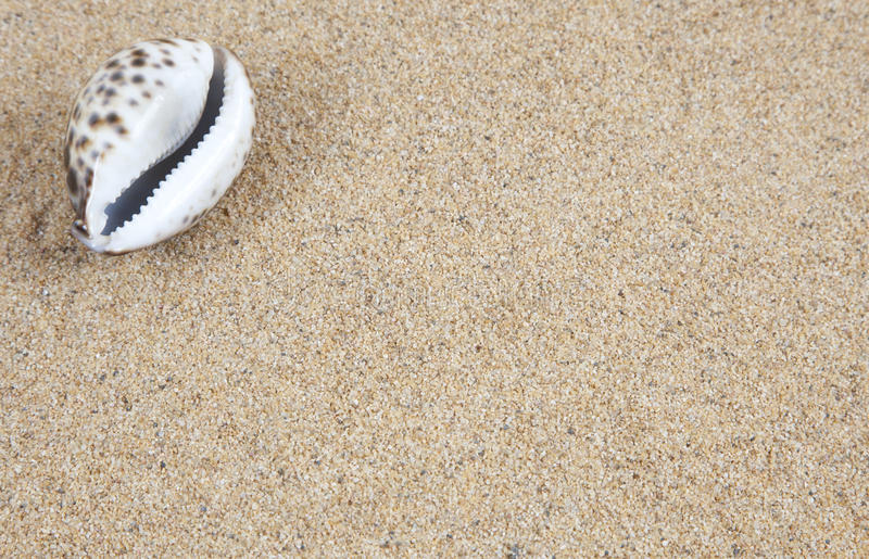 Cowrie Shell on Sand