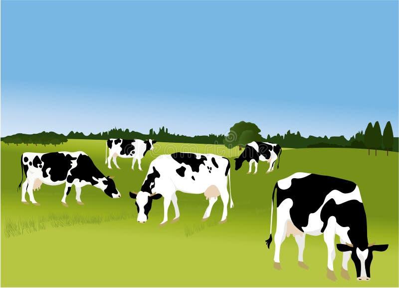 Download Cows stock vector. Illustration of farm, design, animals - 25760188