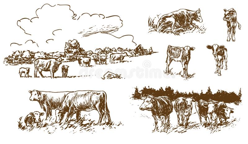 Cows and calves on pasture - hand-drawn illustrations royalty free illustration