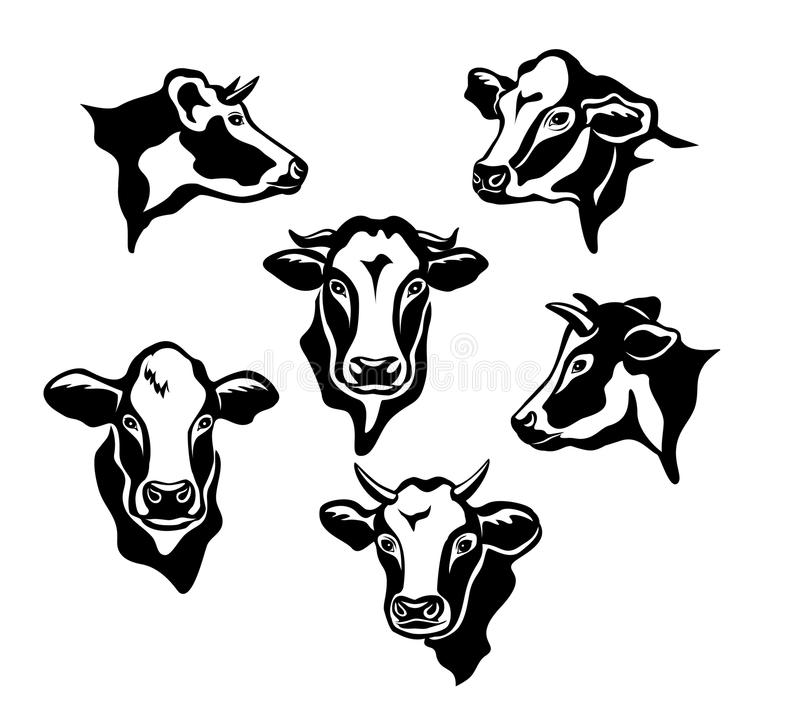 Cows Cattle Portraits. Silhouettes set stock illustration