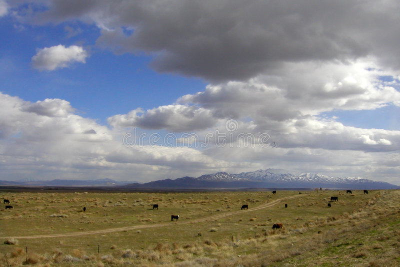 Cows And Clouds Royalty Free Stock Image