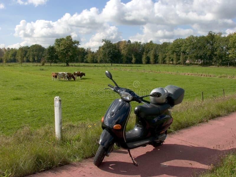 cows day meadow scootering sunny 免版税库存图片